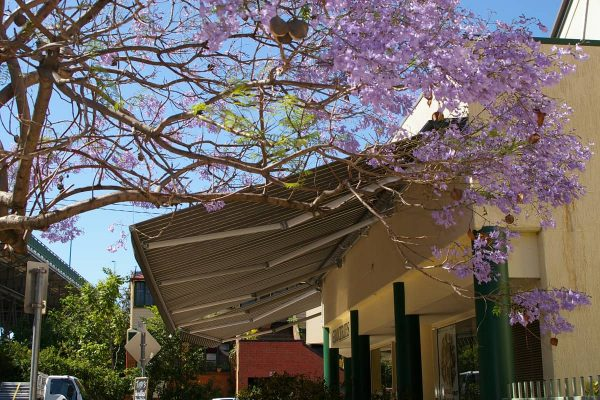 Pivot-Arm-Awnings-QBlinds-Quality-Shade-Solutions